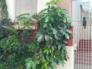 Foto do Casa-Casa com 3 dormitórios para alugar, 100 m² por R$ 3.200,00/mês - Vila Mariana - São Paulo/SP