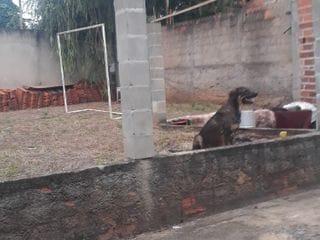 Foto do Chácara-Chácara à venda, Recanto dos Dourados, Campinas, SP